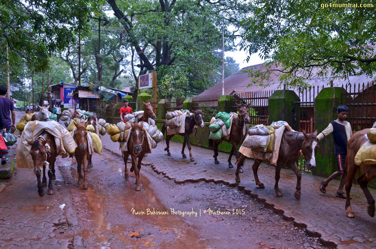 Horses in Matheran Hill