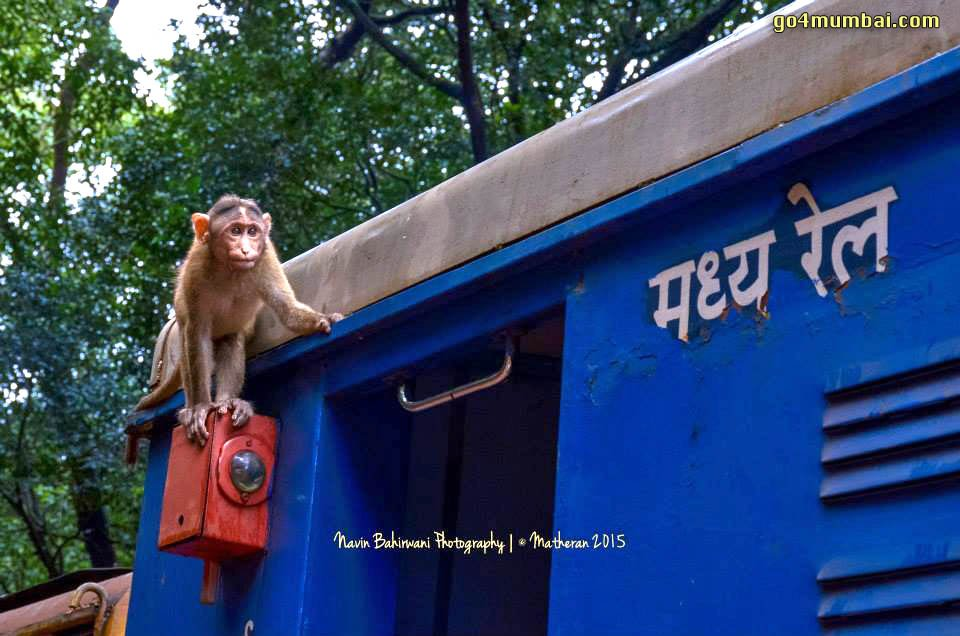 Monkey on Neral Matheran Toy Train