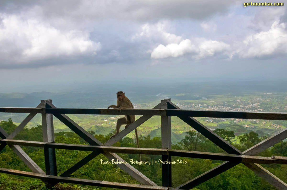 Monkey on railing in Matheran